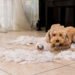 How Doggie Daycare Can Save Your Home While Your Away