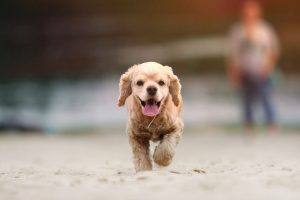 5 Ways To Exercise With Your Dog
