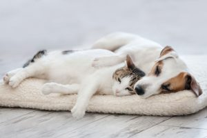 What Do Pet Boarding Facilities Require For Cat & Dogs