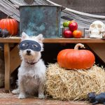 Treats To Be Aware Of Having Around Your Dog Or Cat This Halloween Season