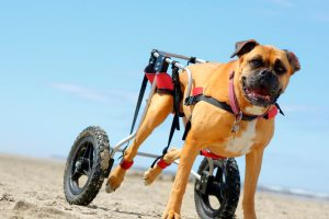 How To Make Boarding Easy For A Dog With Special Needs