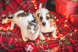 Benefits Of Boarding Your Pet During Your Holiday Travels & Festivities
