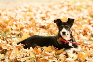 Dog Collars & Leashes: Your Ultimate Guide