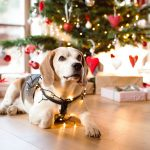 Precautions To Take During The Holiday Festivities For Your Pet (And You)