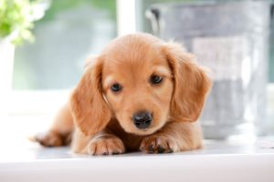 Are You A New Puppy Parent? Here's What You Need To Know