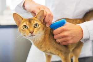 What Exactly Does Micro-Chipping Your Pet Mean?
