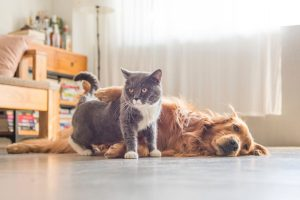 How To Find The Perfect Pet Boarding Facility For Your Fur Baby
