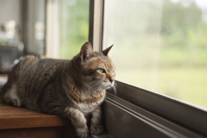 Top Reasons Your Cat Would Benefit From Cat Boarding